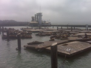 San Francisco's goodwill ambassadors, the sea lions hanging out at Fisherman's Wharf.