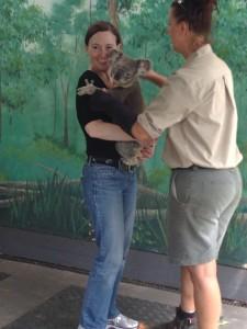 Currumbin Wildlife Sanctuary_Hope_w_Kaola_Feb_28_2013